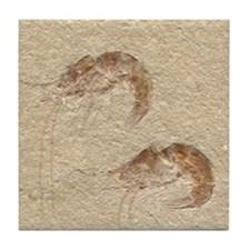 Pair of Fossilized Shrimp Tile Coaster