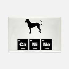 Catahoula Leopard Dog Rectangle Magnet (100 pack)