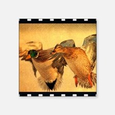 "wild duck western country Square Sticker 3"" x 3"""