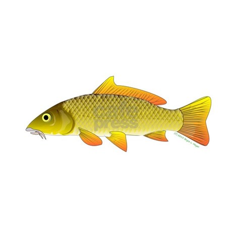 Common carp ornament oval by amazonpuffer for Baby carp for sale