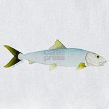 Bonefish Bib