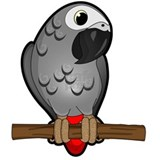 African grey parrots Pajamas & Loungewear