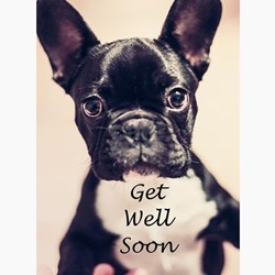 Dog Get Well Greeting Cards Card Ideas Sayings Designs
