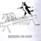 Border collie herding sheep Polos