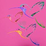 Hummingbirds Underwear & Panties
