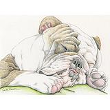 English bulldog Pajamas & Loungewear