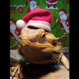 Bearded dragon Pajamas & Loungewear