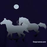 Horse Sweatshirts & Hoodies