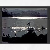 Australian pelican Aprons