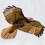 Hawk Bib