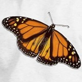 Monarch butterfly Sweatshirts & Hoodies