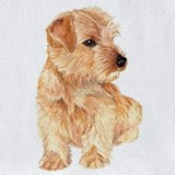Norfolk terrier Bib