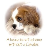 Cavalier king charles Sweatshirts & Hoodies