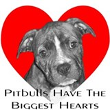 Pitbull dog Wall Decals