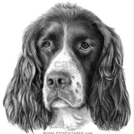 English springer spaniel pajamas by dogspictured for English springer spaniel coloring pages