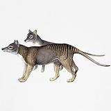 Thylacine Underwear & Panties