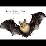 Bat Pajamas & Loungewear