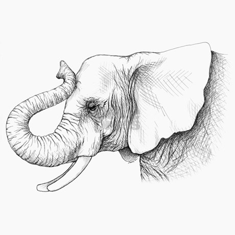 Elephant Head Drawing Side View Pictures to Pin on ...
