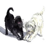 Labradoodle Wall Decals