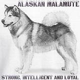 Alaskan malamute Sweatshirts & Hoodies