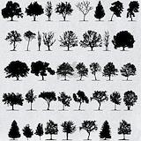 Arborist Bib
