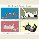 Greyhound T-shirts