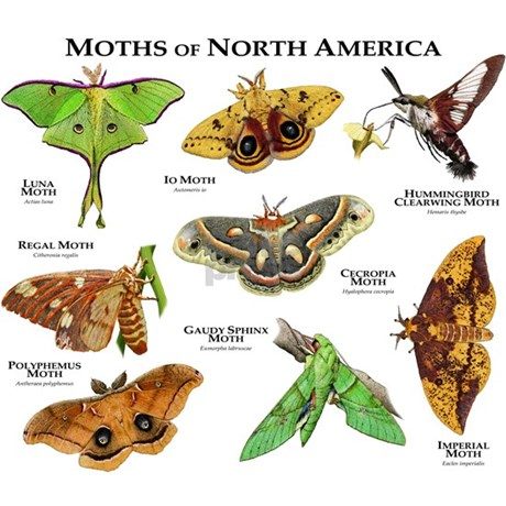 Moths of North America Apron by WildlifeArts3