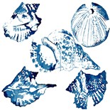 Blue Seashell