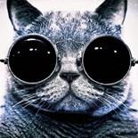 Black White Tux Kitty