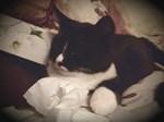 Tuxedo Cat (Sympathy Cat)