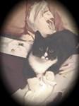 Tuxedo Cat (Get Well Soon Kitten)