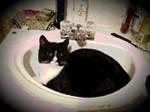 Tuxedo Cat in Sink