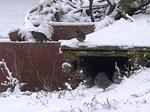 Quail in the Snow