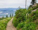 A Wilde Northwest