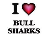 Bull Sharks Attack