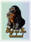 Coonhound_Black & Tan