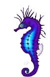 Aquatic Animals Sea Life