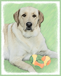 Labrador Retriever-Multiple Illustrations