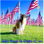 Rescue Collie with Flags