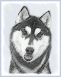 Siberian Husky (Black and White)