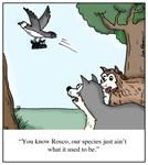 Small Dog Gets Swiped