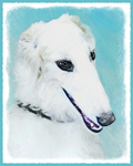 Borzoi-Multiple Illustrations