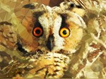 Owl Orange Eyes Low Poly Triangles