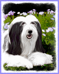 Bearded Collie (Painting)