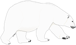 Polar Bear Walking 1