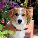 Flower Garden Dog Geometric Floral