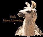 Yeah, Llama Llistening