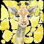 friendly baby giraffe