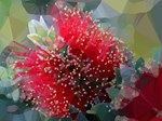 Bottlebrush Low Poly Floral
