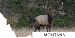 Montana- Rocky Mountain Elk